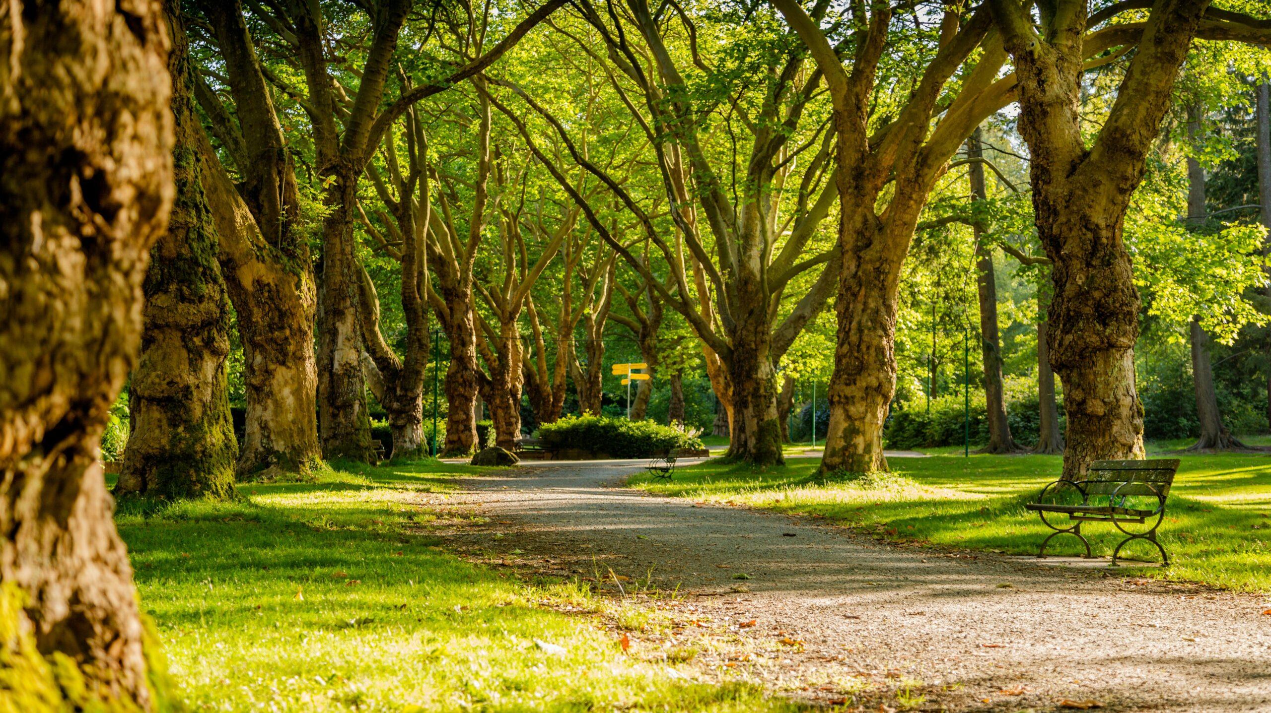 park anglický příměstský tábor Pardubice
